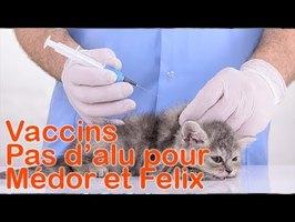 Vaccins : Pas d'aluminium dans les vaccins pour animaux