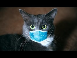 LES CHATS S'ATTAQUENT AU VIRUS
