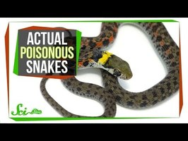 Behold—Poisonous Snakes! (Yes, You Read That Right)