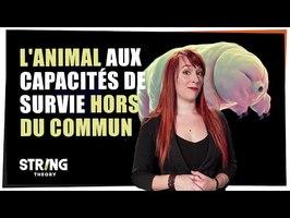 L'animal aux capacités hors du commun !- Castor Mother #35 - String Theory
