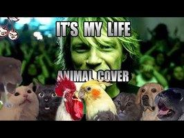 Bon Jovi - It's My Life (Animal Cover)