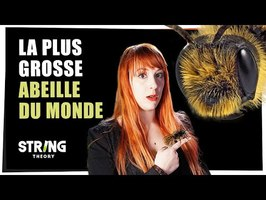 La plus grosse abeille du monde - Castor Mother #32 - String Theory