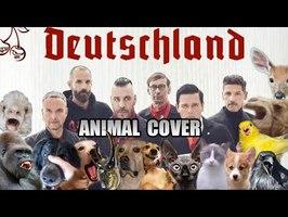 Rammstein - Borkland (Animal Cover)