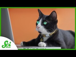 How the Internet Can Finally Answer Its Own Cat Questions