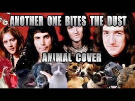 Queen - Another One Bites The Dust (Animal Cover)