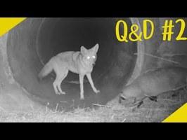 Les Meilleurs Potes ? - Q&D#2