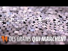 Des grains qui marchent