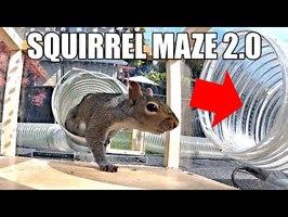 Backyard Squirrel Maze 2.0- The Walnut Heist