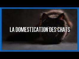 La domestication des chats - IRL