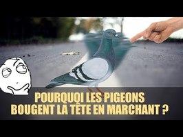 POURQUOI LES PIGEONS BOUGENT LA TÊTE QUAND ILS MARCHENT ?
