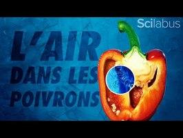 Quelle est la composition de l'air dans les cavités du poivron ?