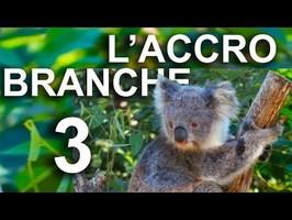 L'ACCROBRANCHE 3 - PAROLE D'ANIMAUX
