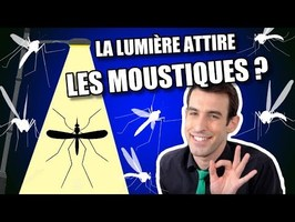 IDÉE REÇUE #35 : La lumière attire les moustiques ?