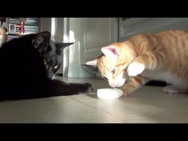 Kitten's First Ice Cube