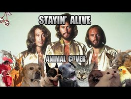 Bee Gees - Stayin' Alive (Animal Cover)