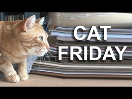 CAT FRIDAY - PAROLE DE CHAT