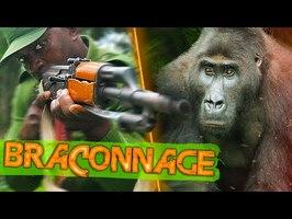 IMMERSION en RDC: la face cachée du BRACONNAGE