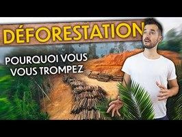 9 erreurs sur la déforestation (à ne plus faire) !