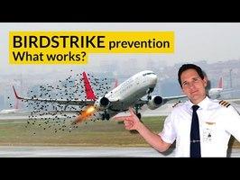 BIRDSTRIKE PREVENTION techniques! Explained by CAPTAIN JOE