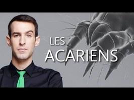Les Acariens - #ParJupidémie !
