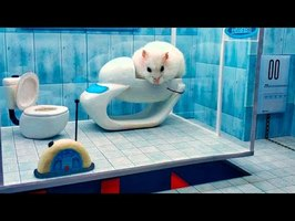 Maze for Pets - Hamster escapes. Obstacle course.