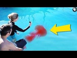 Dyed pool vortex rings! - Physics Girl