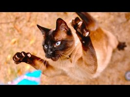 Cat Sprinting and Pouncing in 4K Slow Motion - The Slow Mo Guys