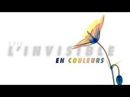Voir l'invisible en couleur grâce à la physique des particules