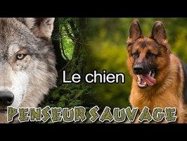 Entre chien et loup | Le chien - Animaux CH.2 EP.13