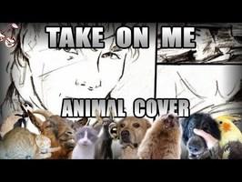 A-ha - Take On Meow (Animal Cover)