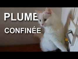 PLUME CONFINÉE - PAROLE DE CHAT