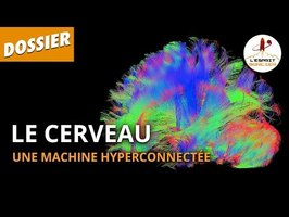 LE CERVEAU : UNE MACHINE HYPERCONNECTÉE - Dossier #24 - L'Esprit Sorcier