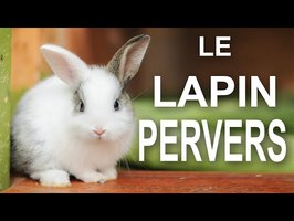 LE LAPIN PERVERS