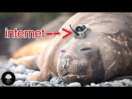 L'internet des animaux du futur - DBY #82