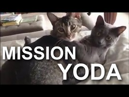 MISSION YODA - PAROLE DE CHAT