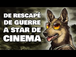 Rintintin : le chien français qui sauva Warner Bros !