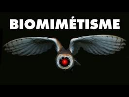 Biomimétisme, s'inspirer de la nature pour le futur