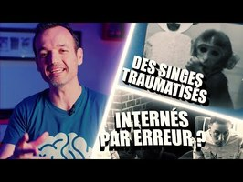 6 expériences stylées faites sur le cerveau #2