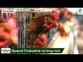 ALIMENTATION : Le business honteux des labels alimentaires - Le Too Late Show #5