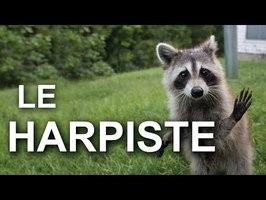LE HARPISTE - PAROLE DE RATON LAVEUR