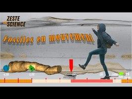 Fossiles en mouvement | ZdS#27