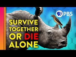 Why Some Species Team Up To Survive | IN OUR NATURE