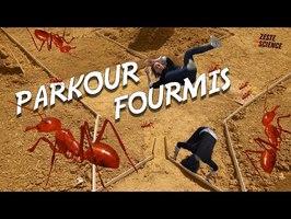 Parkour Fourmis | ZdS#35